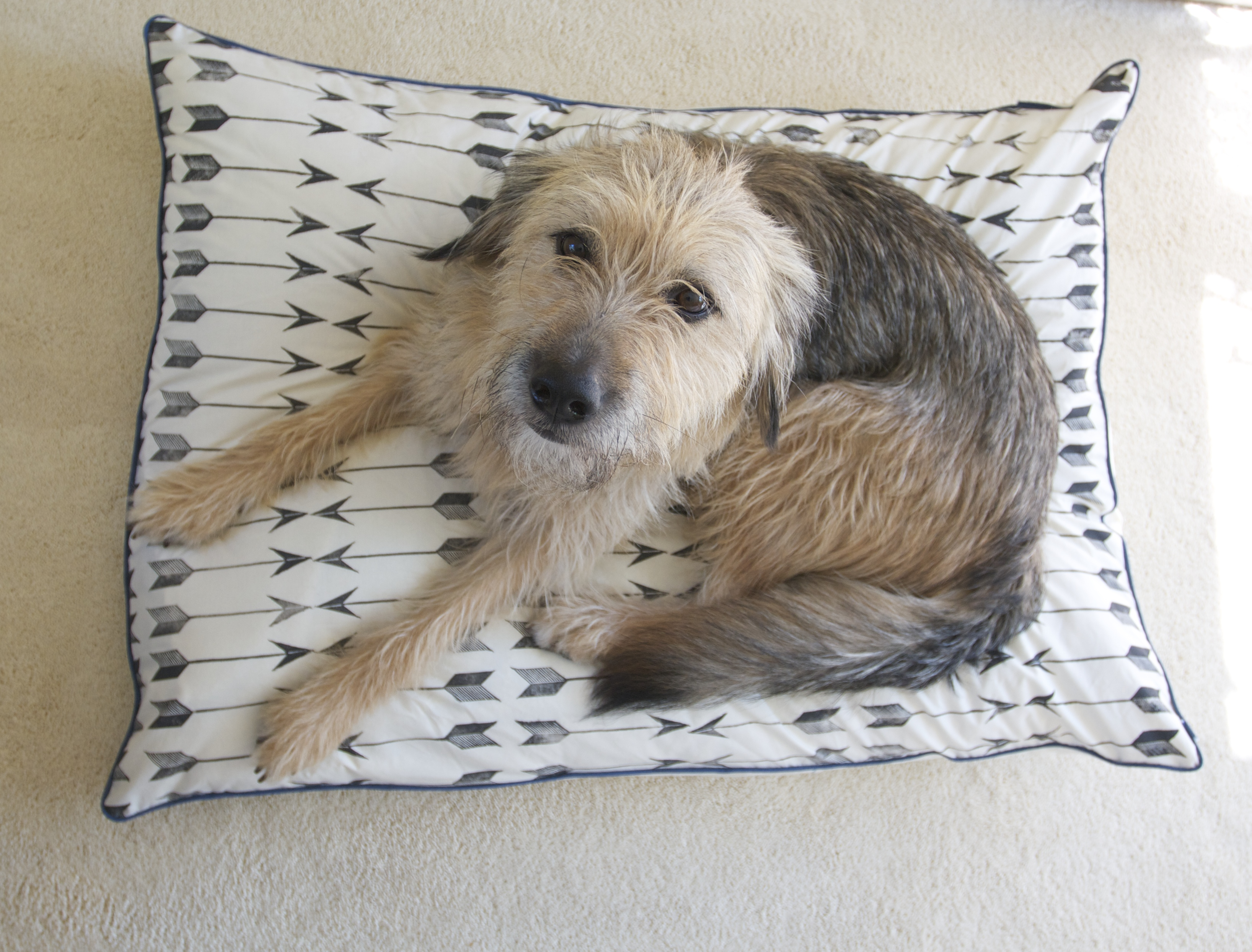 It's Official! Celebrating the Adoption of Winifred with a Block Printed Dog Bed