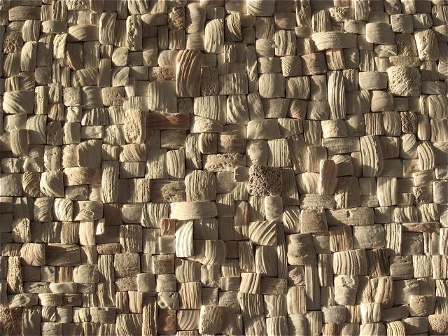Detail from the clam shell sculpture in the setting sun.  Photo courtesy of Steve Chopp.