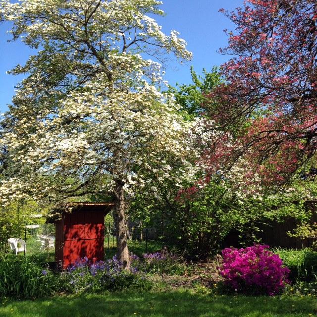 spring coop